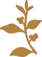 RoveCoast_Icon14_Gold.png