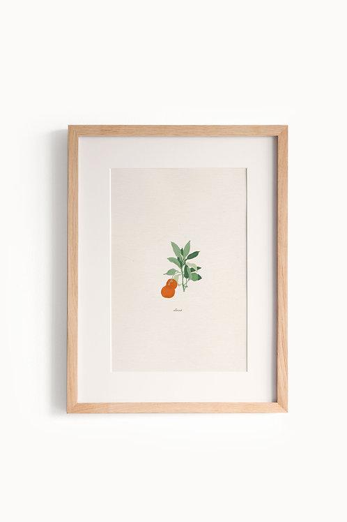 Naranja color naranja