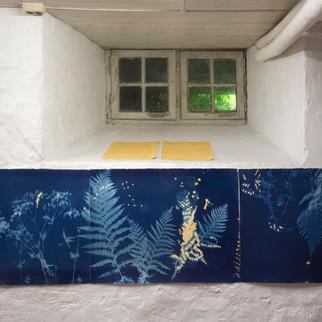 Fra hagen, 3 x 56 x 76, cyanotypi