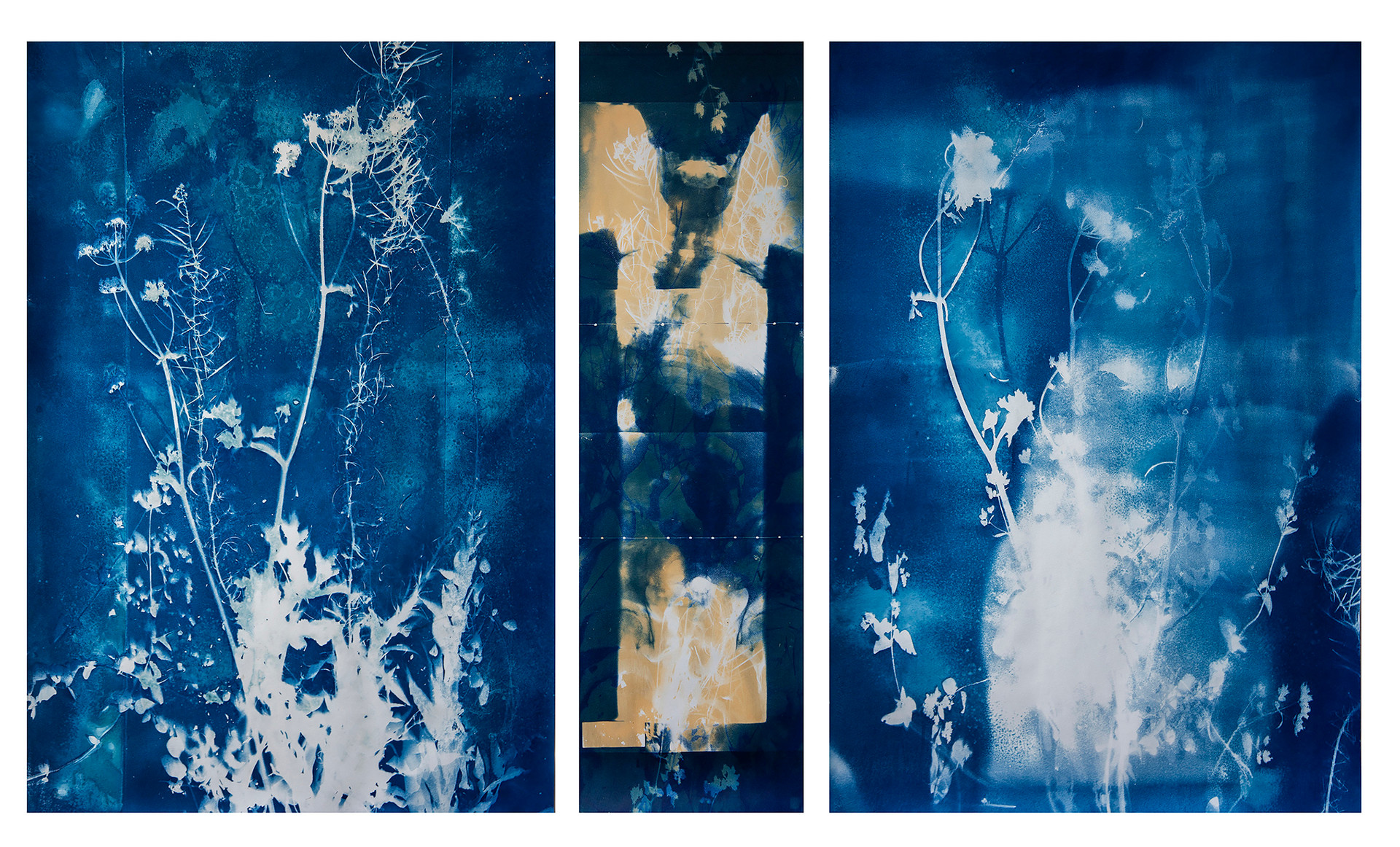 """What keeps us standing"" cyanotype and bleached cyanotype."