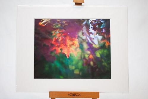 Matted Metallic Print - Surreal: Fall Maple