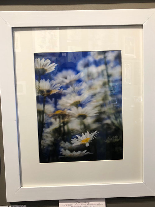 Surreal Daisies 16x20 Framed