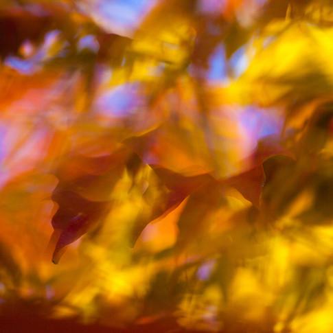 Surreal Fall Leaves