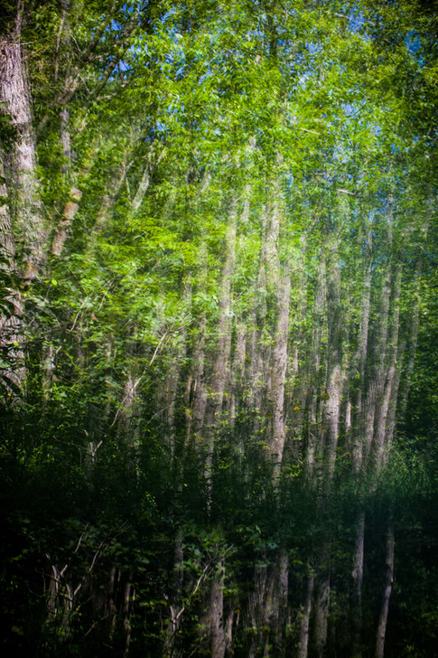 Surreal Marine Trees