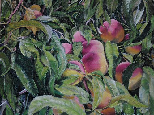 "Backyard Peaches (11""x 14"")"