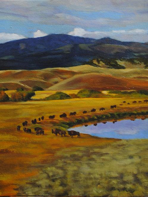 "Buffalo Trail (8""x 10"")"