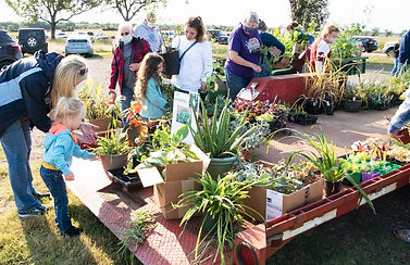 Children and adults look at colorful plants on red flatbed trailer at Learning Fields 2020 Fall Plant Sale
