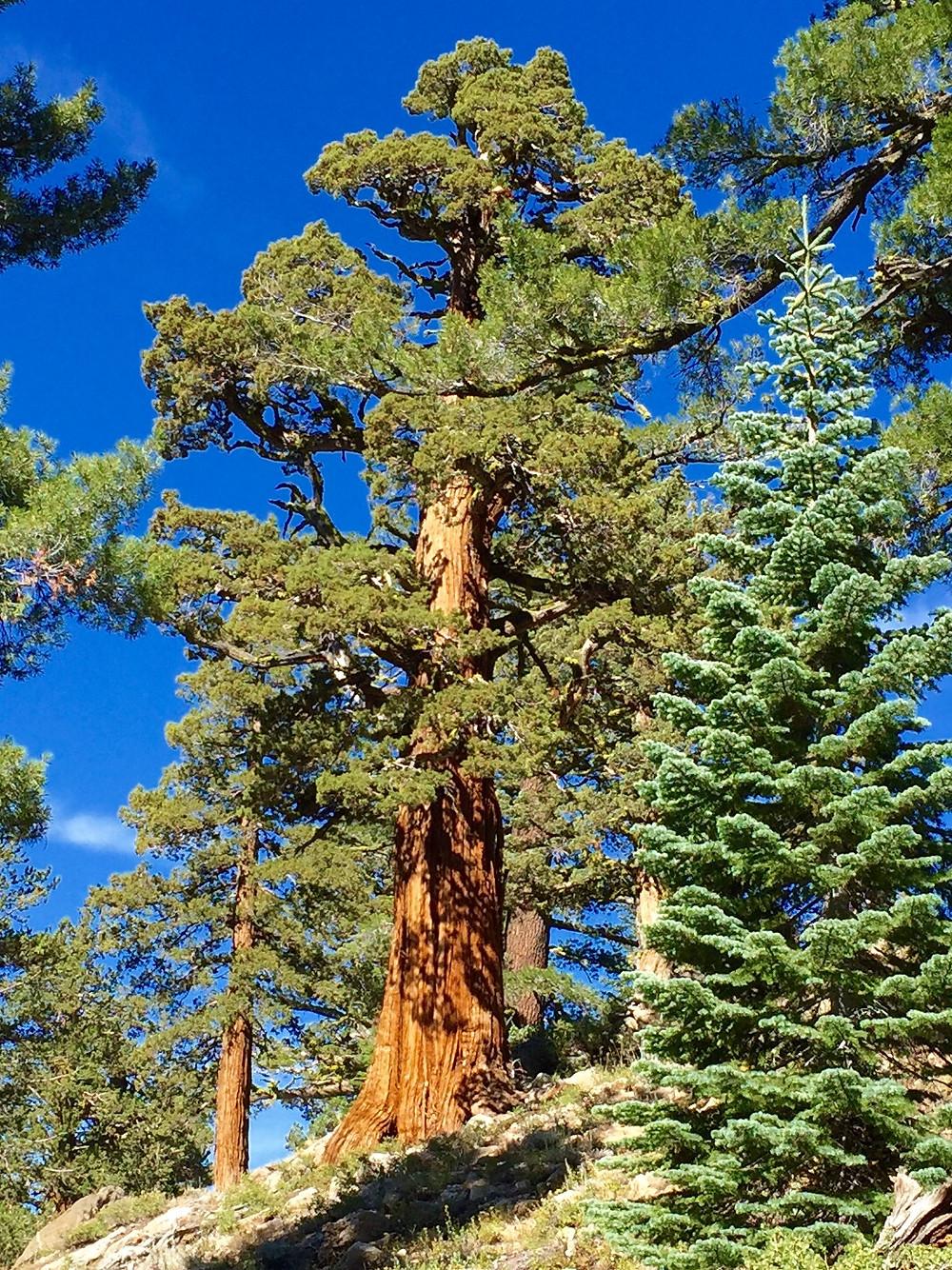 Majestic Ancient Tree