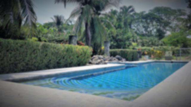 the almond tree oasis swimming pool