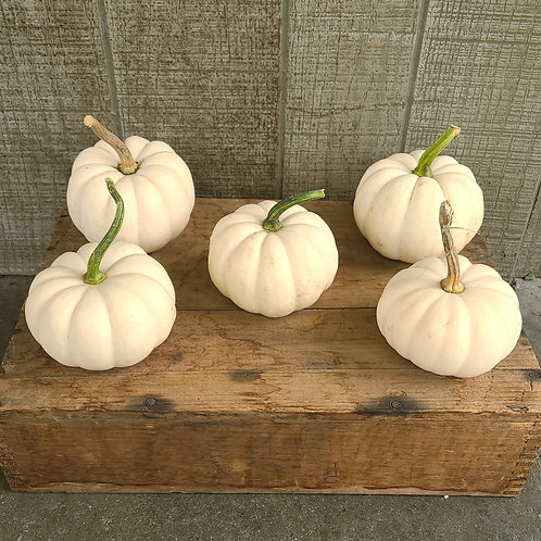 Mini White Pumpkin