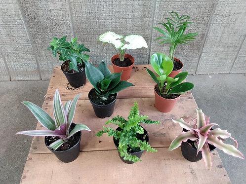Small Foliage Plant