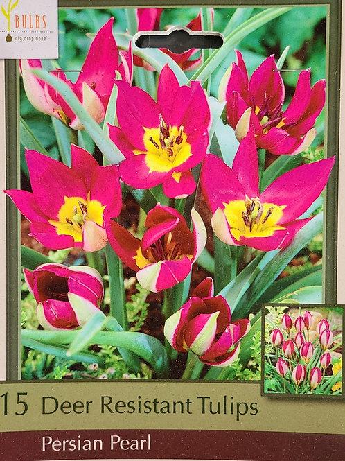 Deer Resistant Tulip - Persian Pearl