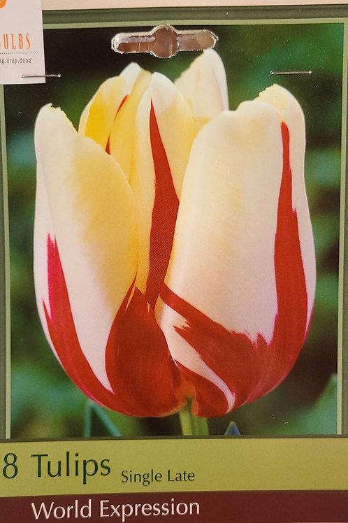 Tulip - World Expression