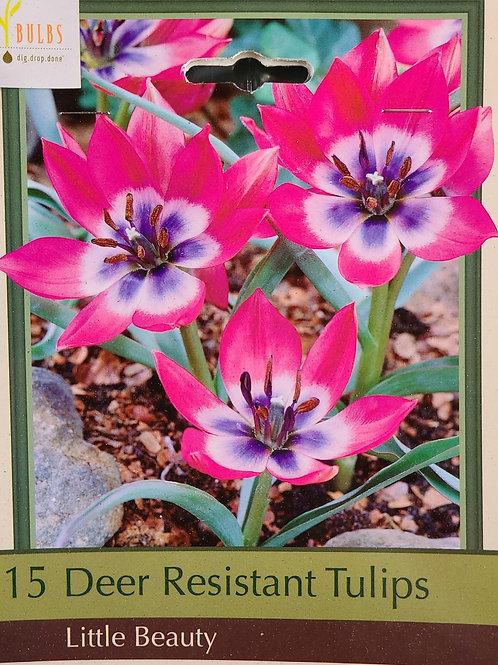 Deer Resistant Tulip - Little Beauty
