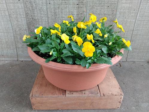 Large Patio Pot