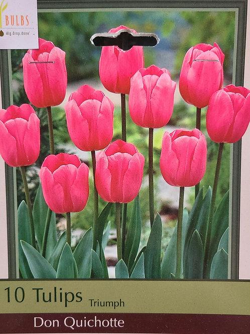 Tulip - Don Quichotte