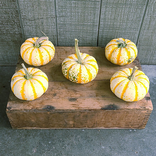 Mini Striped Pumpkin