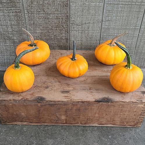 Wee-Be-Little Pumpkins