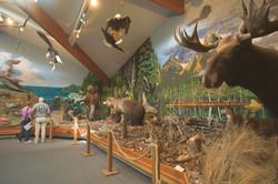 Alaska Bald Eagle Foundation