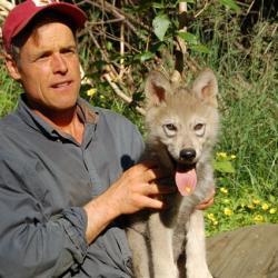 wolf pup.jpg