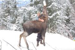 moose calf feeding.jpg