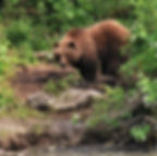 Bear sighting at rock slide