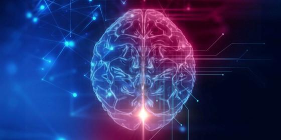 Disease models in 3D: A human brain in mice skulls?