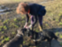 Ali from Time 4 A Walk giving a Staffy and a Lab cross treats on an adventure walk near Iron Acton
