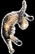 貓跳.png