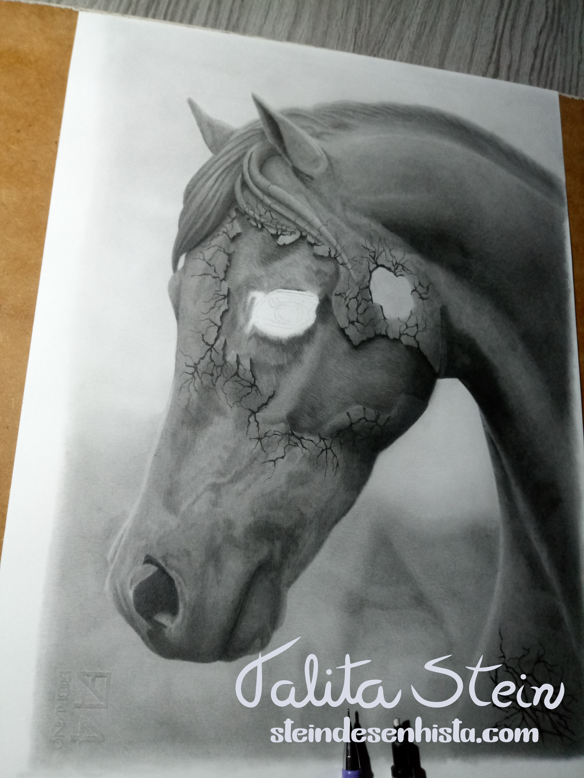 Crioulo-Creole horse- Paint horse-Puro-s
