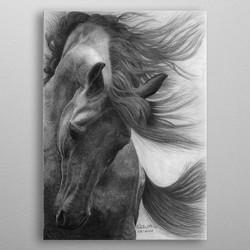 Talita Stein-Horse drawing-Cavalo-Horse-