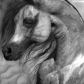 Arabians: Representação artística alterando desenho final em relação a referência