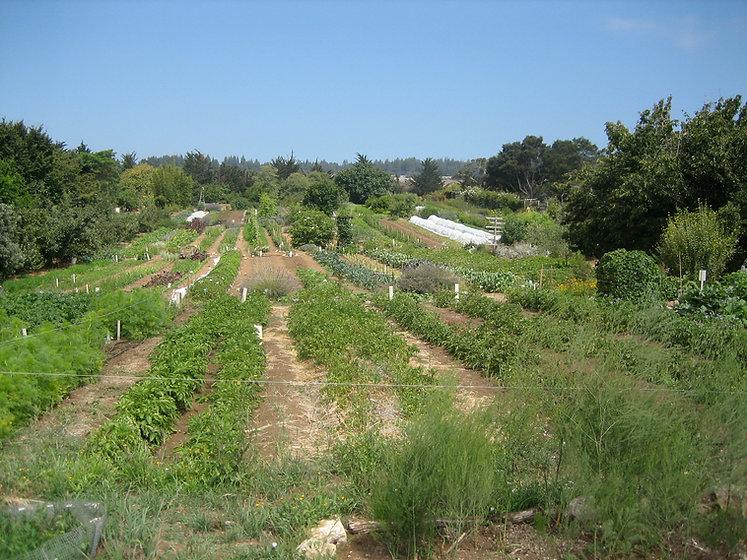 UCSC_farm.jpg
