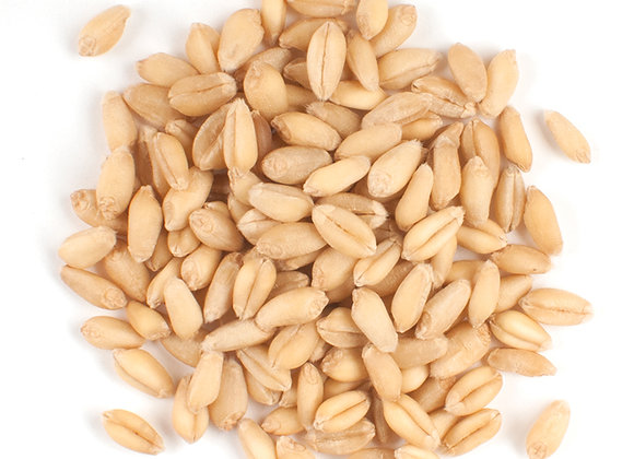Organic Wheat Berries Spring