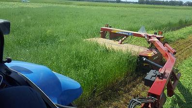 Hay making 2a.jpg