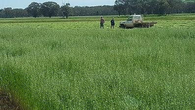 Hay making 1a.jpg