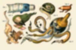 Material Creature Collection..jpg
