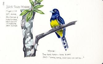 WS19 Guyana- Amalia (Ysemay) Dercon_IL 1
