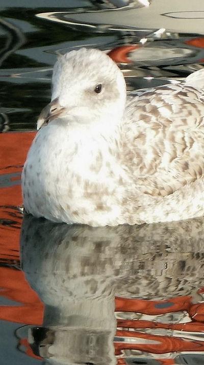 gull on the sea