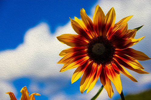 Sunflower Day