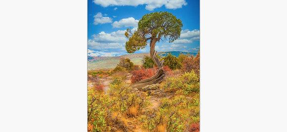 Juniper Tree By Tom Potter