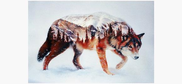 Snow Mountain Wolf