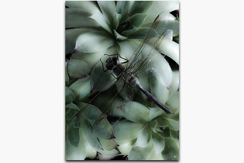 Dragonfly by Irene Griego