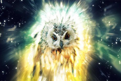 Owl Positive Energy