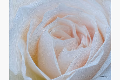 White Rose - Irene Griego Collection