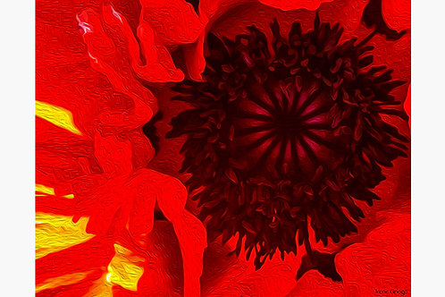 Red Poppy - Irene Griego Collection