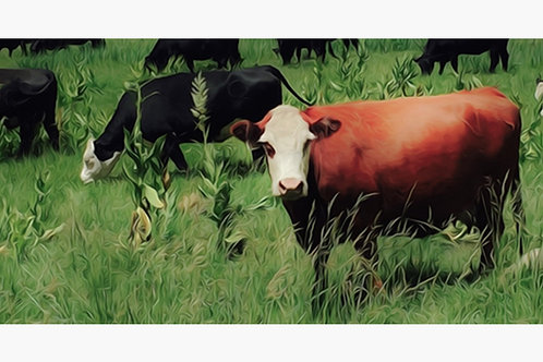Brown Cow Oil Paint on Canvas