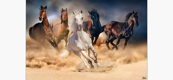 Light Horse Large Art Gallery Collection