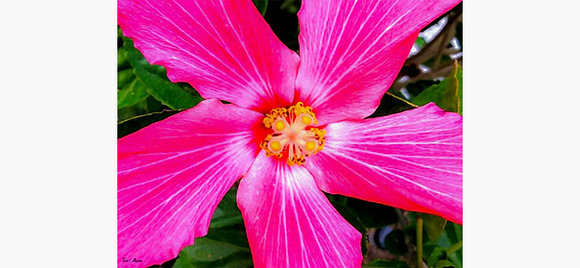 Pink Flower Canvas by Tara Alegria
