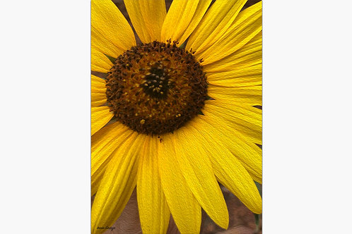 Sunflower Energy By Irene Griego